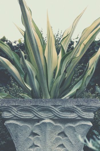 Calm Nature Nature_collection Plants Plant Vase Stone Garden Foliage EyeEm Nature Lover