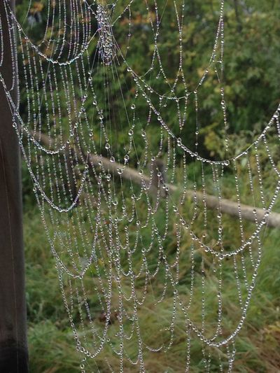 Spider Web Fragility Vulnerability  Drop Close-up Water Focus On Foreground Beauty In Nature