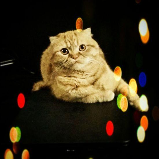 Ziggythecat Trollcat WokeUpLikeThis