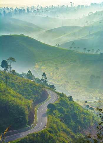 Cukul road at morning ASIA Bandung Beautiful Cool Cukul Hills INDONESIA Java Misty Morning Nature Rays Of Light Road Travel Trees Destination Fog Landscape Mountain Pangalengan Photography Popular Sun Sunrise Tea Plantation