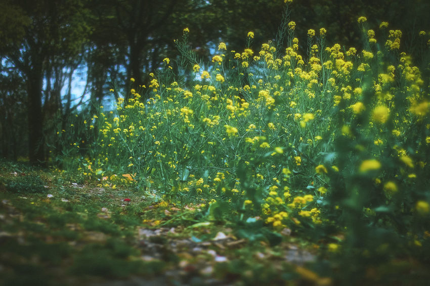 Beauty In Nature Cole Flowers Day Flower Green Growth Nature No People Outdoors Plants Yellow Flower