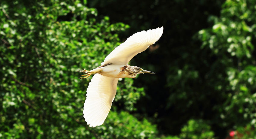 Just fly and feel free Fly Away Animals In The Wild Beauty In Nature Close-up Flying Flying Bird Nature No People