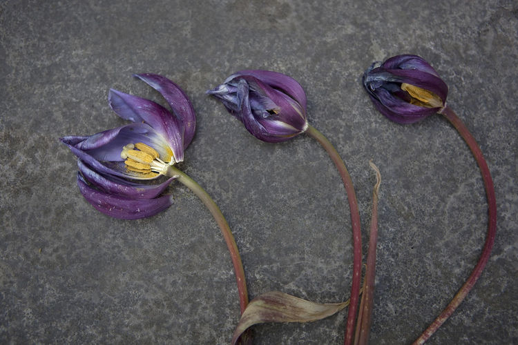 Close-up of wilted flowers on ground