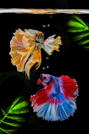 Close-up of fish underwater