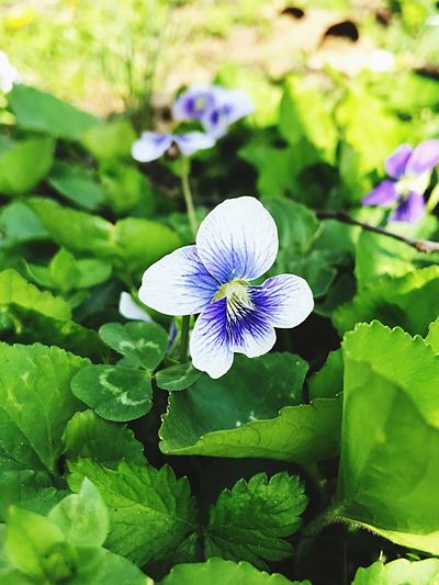 Understanding good will help your pedals grow the right way. Youth Hope Life Purple Green Blue Flower Petal Fragility Nature Beauty In Nature Insect Purple Growth One Animal Freshness Flower Head Butterfly - Insect Animal Themes No People Plant Animals In The Wild Day Leaf Close-up Outdoors EyeEmNewHere