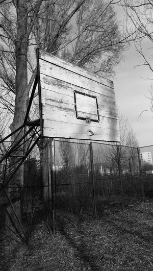 Tree Low Angle View No People Day Outdoors Sky Growth Nature Branch Blackandwhite Leicap9 Leica Lens Basketball
