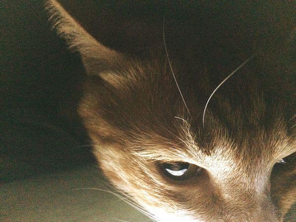 Cat Curry Cat 카레야 무서워ㅎㅎ