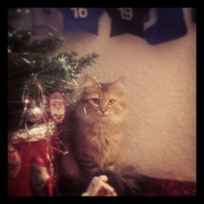 Ich wünsche euch allen ein schönes Weihnachtsfest.