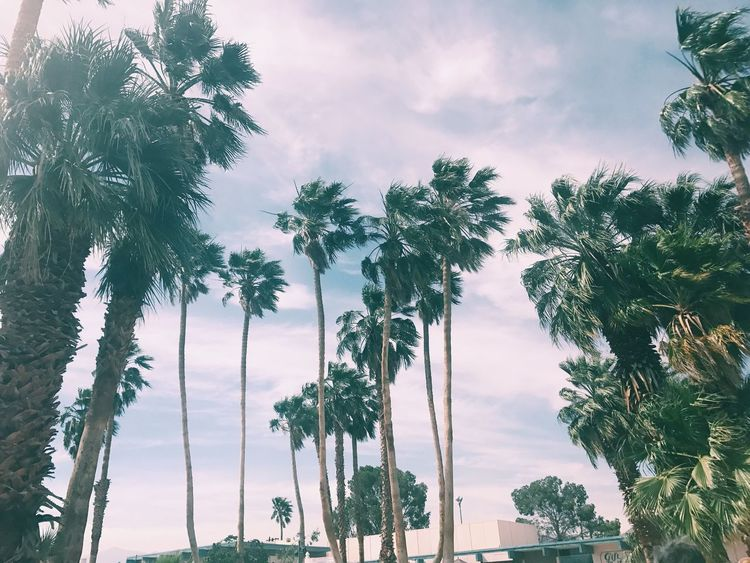 Palm Tree Low Angle View Outdoors Beauty In Nature California EyeEmNewHere Palmsprings Enjoyment Scenic View Dessert Roadtrip Landscape