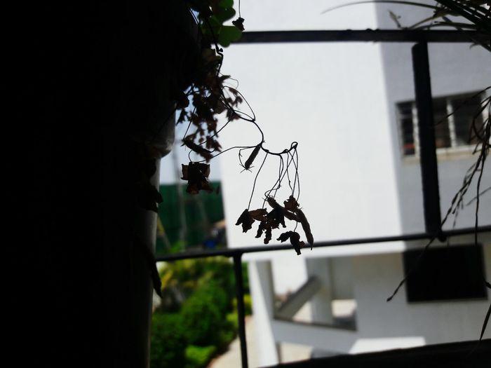 Hanging No