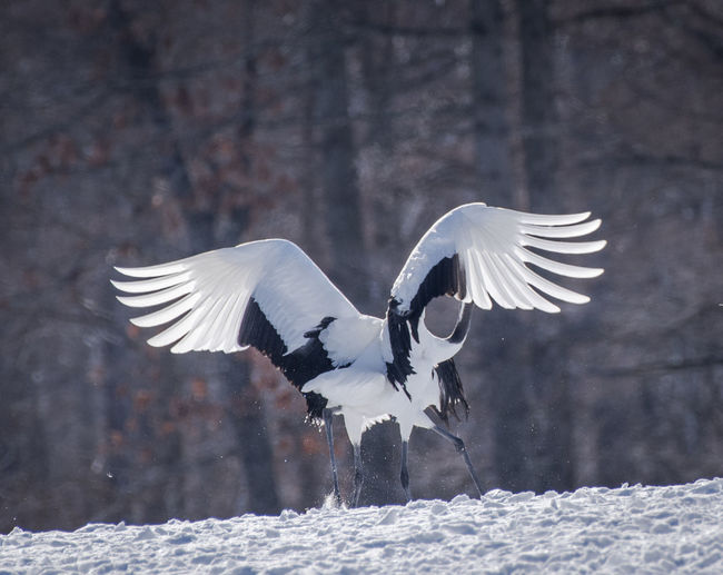 White bird flying over snow