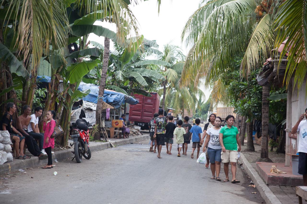 People On Street Amidst Trees