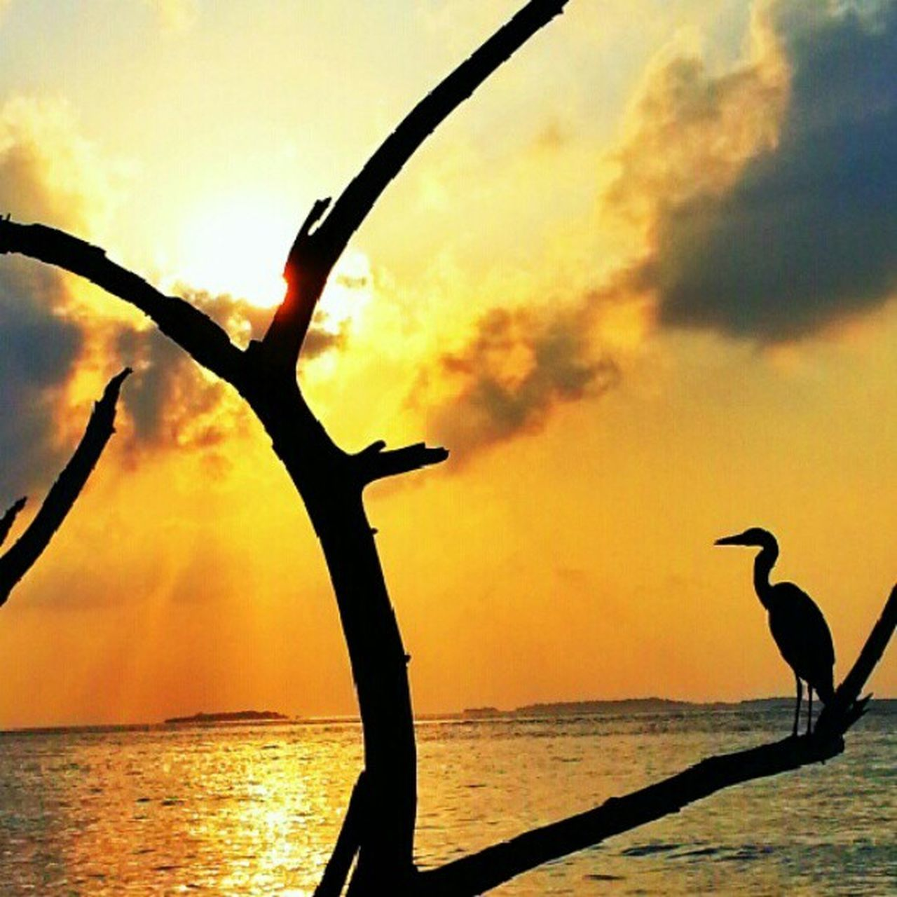 silhouette, sky, nature, sea, cloud - sky, outdoors, water, sunset, beauty in nature, no people, horizon over water, scenics, animals in the wild, animal themes, day, bird