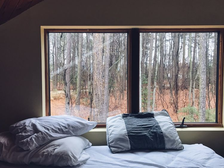 Window Curtain Bed Tree Relaxation Bedroom Day Indoors  Comfy  Saint Michael