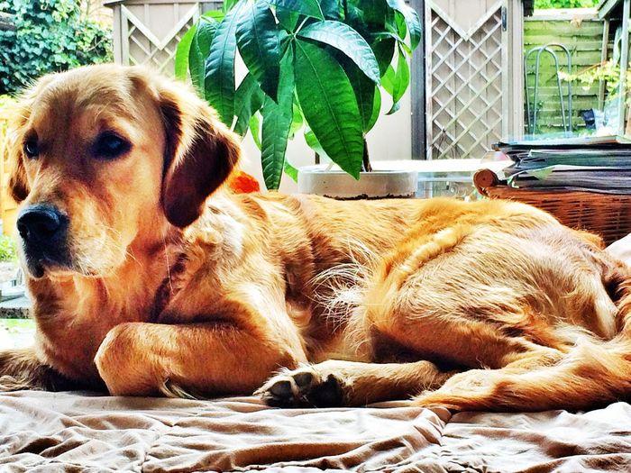 Greta Dog Dogs