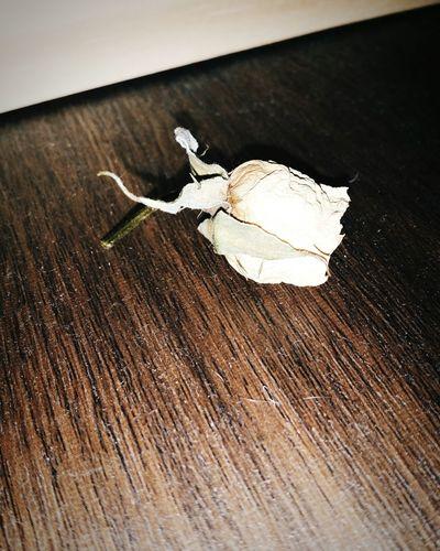 꽃 장미꽃 Flower Rose🌹