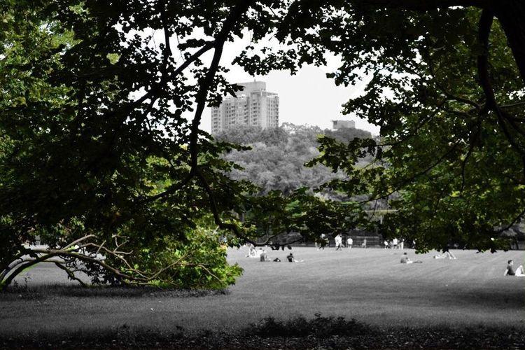 Central Park NYC Naturevscity New York City Nature