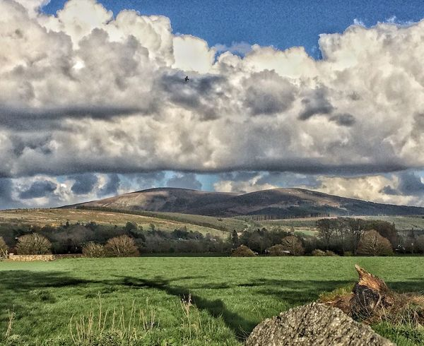 Fluffy clouds ☁️ Nature Cloud - Sky Sky Scenics Beauty In Nature Landscape Day Tranquil Scene Tranquility Outdoors Mountain Rural Scene Mountains Irishlandscape Agriculture Mountains And Valleys Ireland Irelandinspires Wicklow Mountains  Wicklow Animal Themes Field Sheep Countryside Irishlandscape