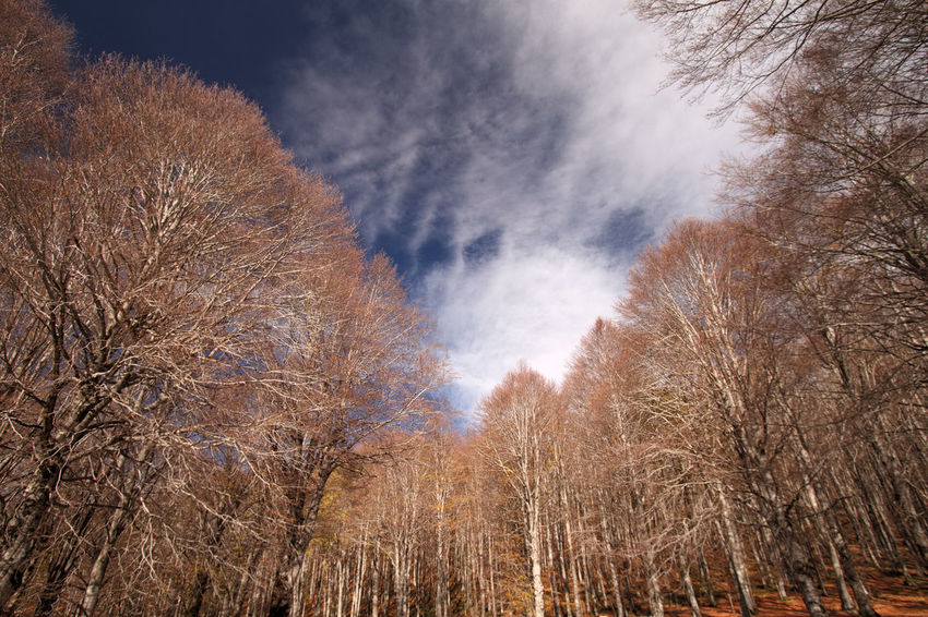 Bare Tree Beauty In Nature Branch Day Nature No People Outdoors Scenics Sky Tranquil Scene Tranquility Tree Montelivata