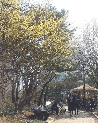 Spring Seoul Spring Seoulspring2017 Yeouido Tree In Blossom Seoul Southkorea