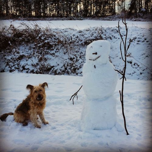 Puppy By Snowman On Snow Covered Field