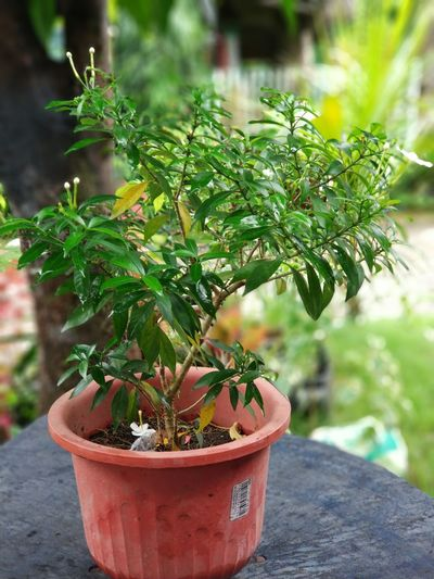 Simple nature Growth Green Color Plant Potted Plant Nature Day Outdoors No People Close-up Beauty In Nature Greenhouse Tree First Eyeem Photo