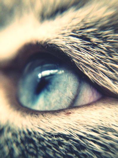 L'occhio di Yuki
