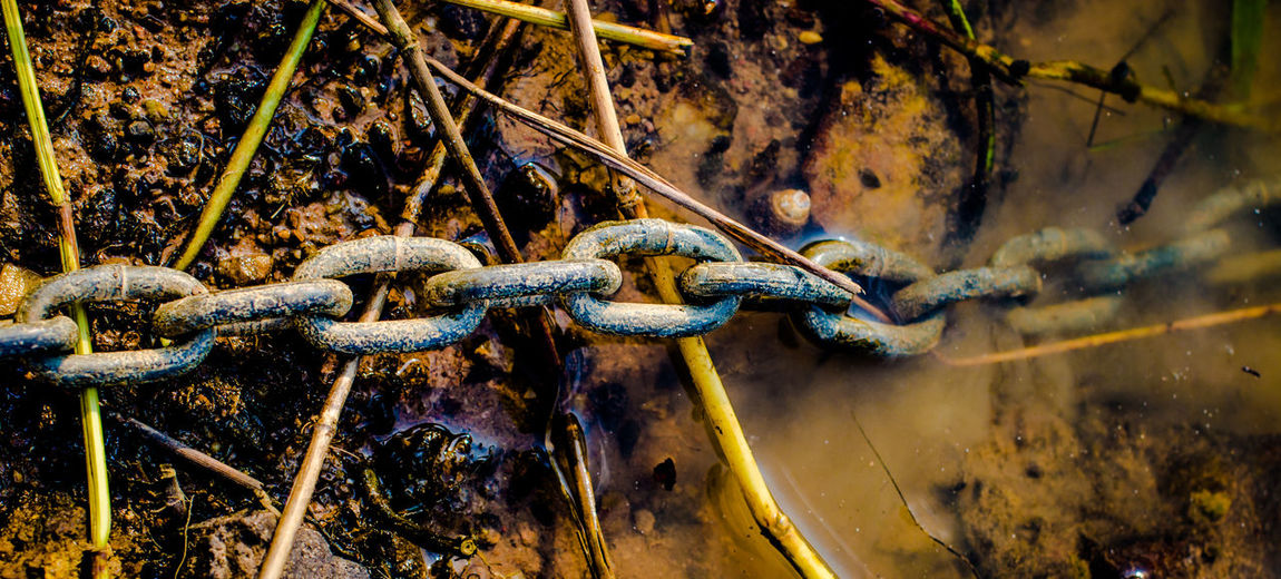 Close-up of rusty chain in water