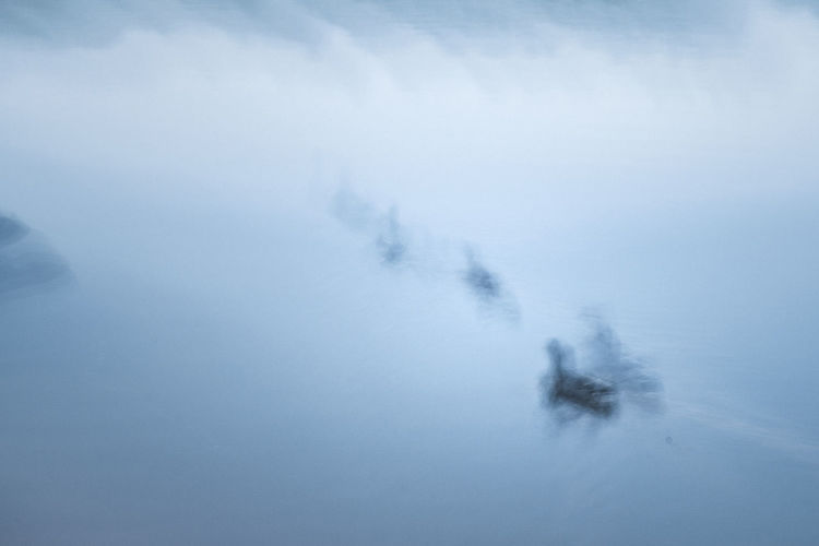 Family. Outdoors No People Nature Sea Life Birds ICM Photo ICM Intentional Camera Movement Day Pentax Backgrounds Sweden