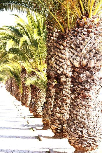 Harbor of Olhao Algarve Portugal Hello World Taking Photos Enjoying Life Olhao Harbour Palm Trees Sunny