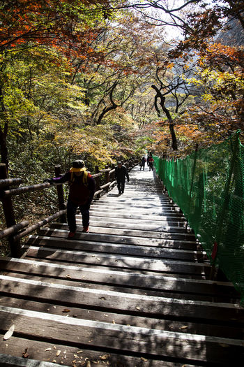 autumn in Maisan Mountain, Jeonju, Jeonbuk, South Korea Autumn Autumn Colors Beauty In Nature Branch Day Fall Footbridge Full Length Growth Maisan Men Mountain Nature Outdoors People Real People The Way Forward Tranquility Tree Two People Walking Walkway Women