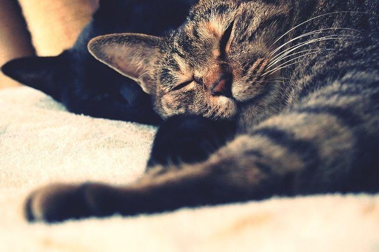 アプデできた。よかった!スヤスヤ… うちの猫 Cat Relaxing