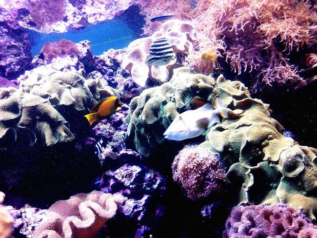 Sea Fish Coral Clownfish NMMBA Graduation Trip Taiwan EyeEm