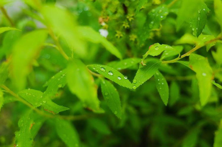 Waterdrops Raindrops Leaves Leaf Green Rain 雫 しずく