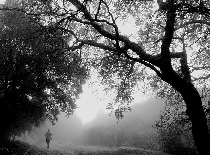 Nature Silhouette Morning Run Morning Mist Lisbon Monsanto Outdoors Real People