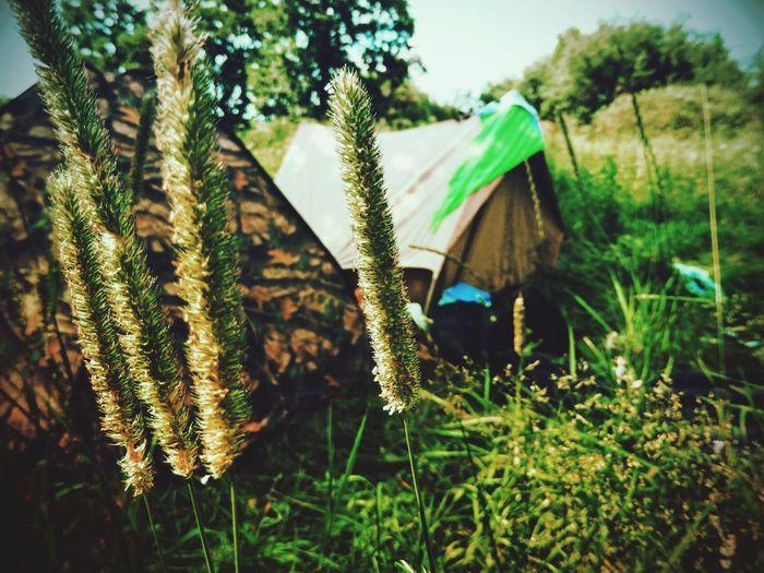 рыльск Rylsk 2016 палатки лето солнце☀ хочуеще хочуобратно хочулето