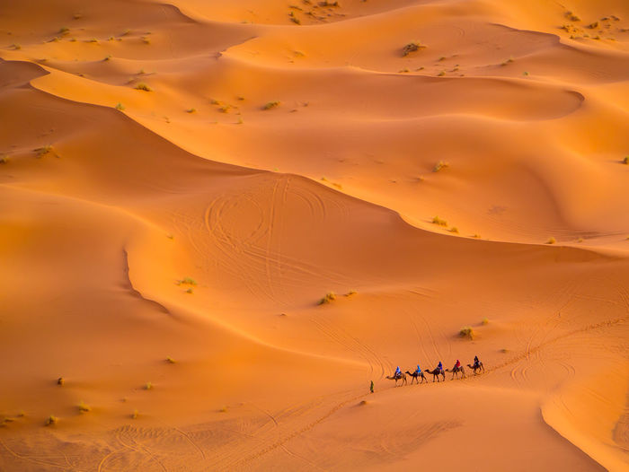 People Riding Camels On Sand Dunes In Desert