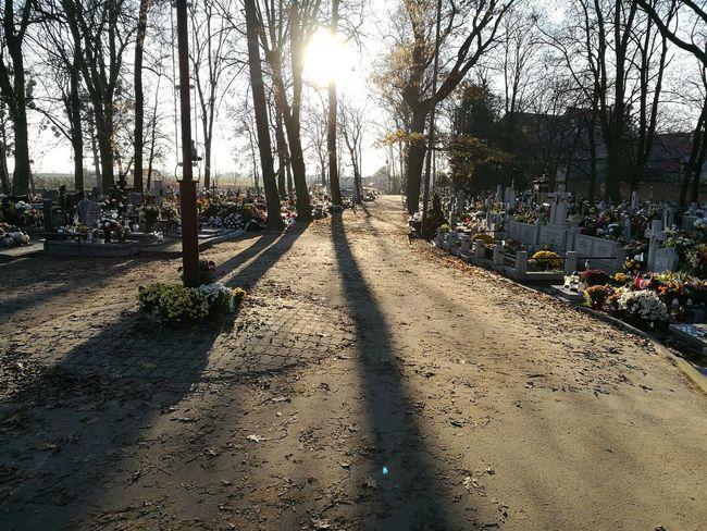 Cemetery Sunlight Nature Shadow Tree No People