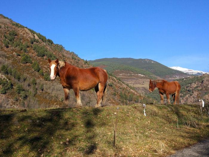 EyEmNewHere Horses Natural Beauty Winter Domestic Animals Eyem Nature Lovers  Eyemphotography Horse Photography  Mountain Mountains Nature Pirineus World