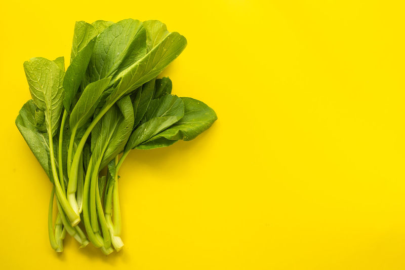 Close-up of fresh green leaf against yellow background