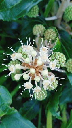 EyeEm Nature Lover Flowers Wintergarden