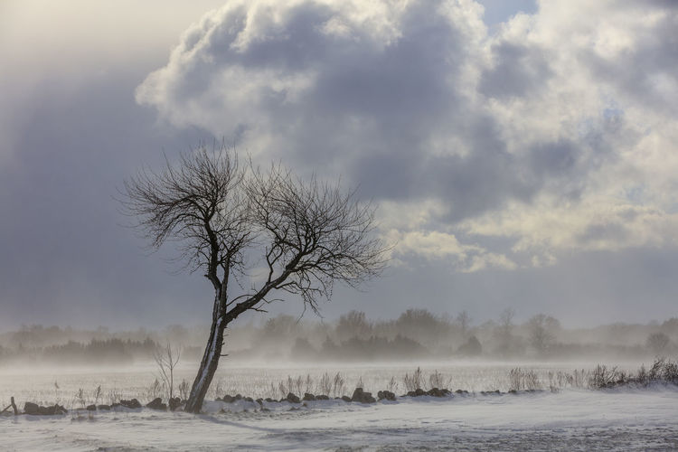 Bare Tree On Snow Covered Landscape Against The Sky