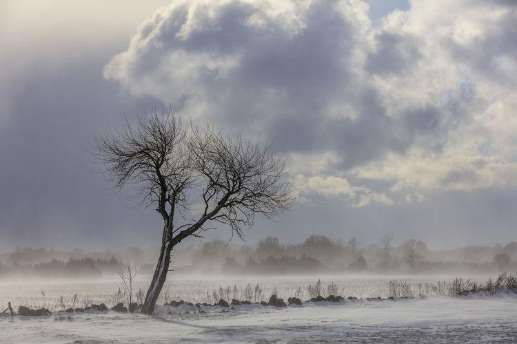 Field Light Sweden Tree Winter Clouds No People Open Area Snow Stonewall Windy Öland