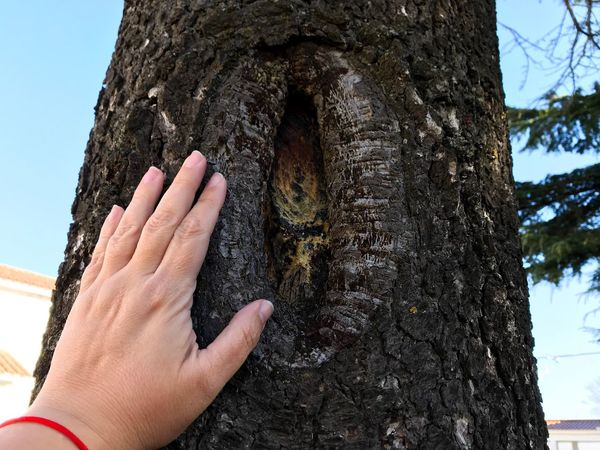 Touching Touch Lifestyle Lifestyles Treehugger Hugging A Tree Ecological Ecology Tree Trunk Tree Cedrus Cedar Tree Cedar Environment Fingernail Fingers Hand Human Hand Tree Trunk Human Body Part Human Finger One Person Real People Outdoors Close-up Nature People