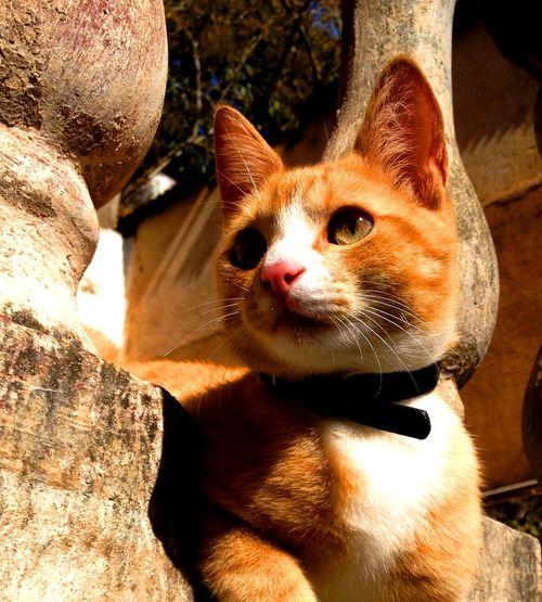 Cat Domestic Animals Felino Pets Portrait Pet Portraits Yellow ねこ 貓