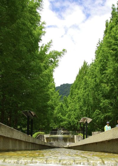 View of trees by swimming pool against sky