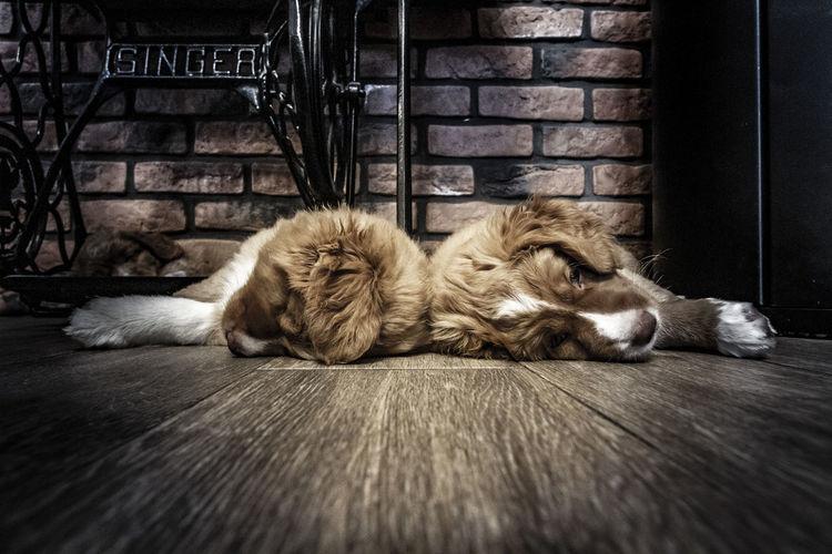Dog sleeping on floor