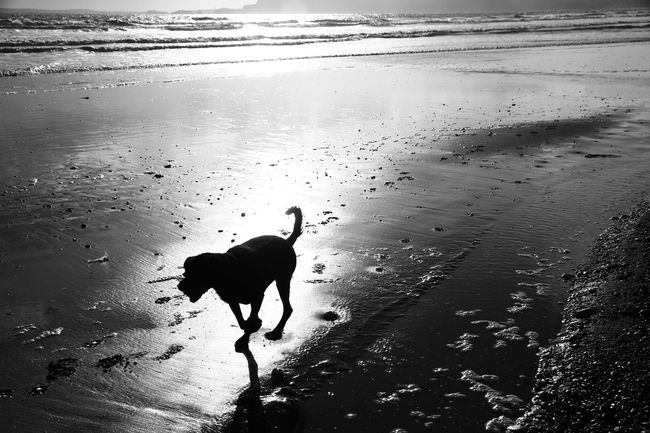 Animal Themes Beach Beauty In Nature Day Dog Dog Run On The Beach Dog Run On The Beach Mammal Nature Outdoors Pets Running Running On The Beach Scenics Sea Shore Tranquil Scene Tranquility Water