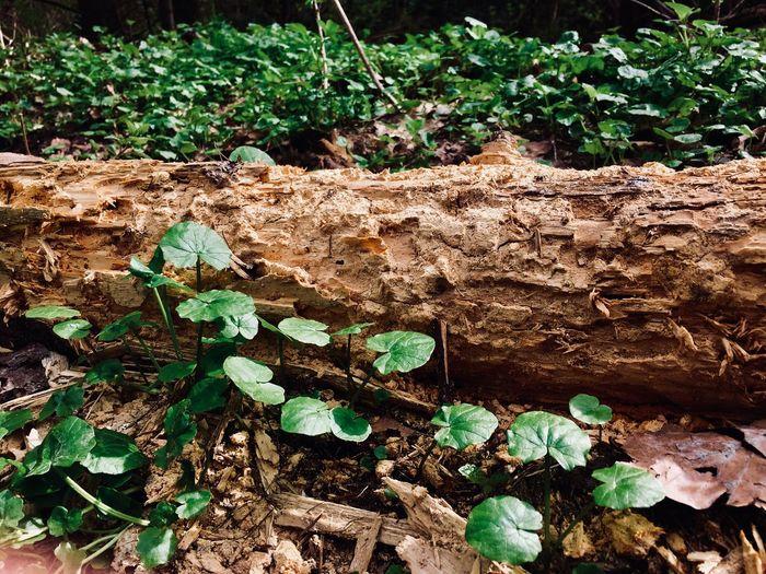 Plant Part Leaf