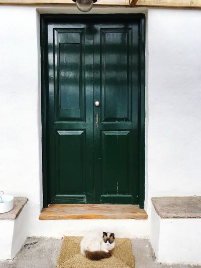 Our holiday cat Green Dress Green Door Entrance Cat Feline Architecture Built Structure Building Exterior Pets